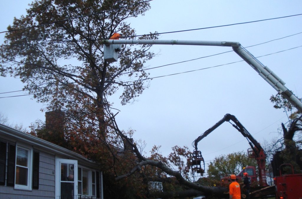 emergency tree removal whitman ma