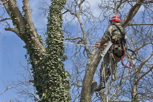 tree pruning professional
